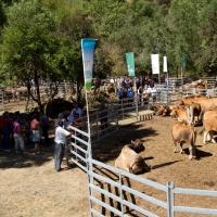 Feria de las 7 Villas 2011